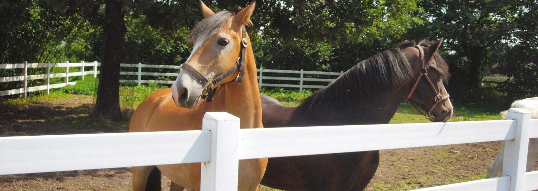 Twee paarden achter een de Poda Dallas kunststof omheining. Mooie combinatie van kwaliteit en schoonheid. Poda Omheiningen