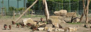 Hans-Jürgen Schröder, Zoo-Inspektor im Zoo Osnabrück und Vorsitzender Deutscher Bisonzuchtverband