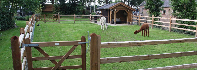 Zaun für Menschen mit Alpakas