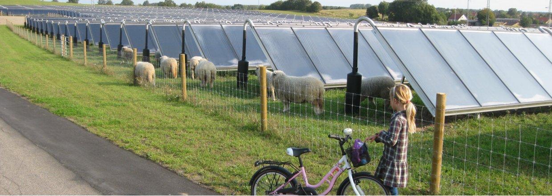 Fårene passer solenergianlægget