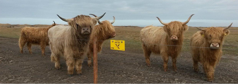 """Poda draagt zijn steentje bij binnen het project """"Natuurontwikkeling Texel"""""""