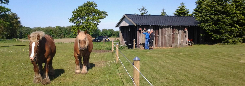Zwei große Pferde laufen an einem Hippolux-Elektrozaun entlang. Im Hintergrund unterhalten sich zwei Männer neben einer Weidehütte | Poda Zaun
