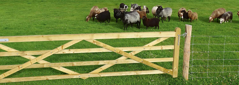 Eine Schafherde gras in einem Gehege. Ein Netzzaun und ein Holztor sorgen dafür, dass die Schafe sicher im Gehege bleiben | Poda Zaun