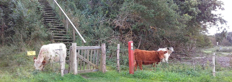 Ein Klapptor führt Fußgänger sicher in ein Gehege für Kühe. Auf der anderen Seite des Zaunes führt eine Treppe hoch zu einer Anhöhe | Poda Zaun