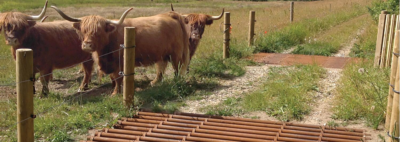 Drei Rinder überqueren einen Feldweg, um zu einem anderen Gehege zu kommen. Zwei Weideroste sorgen dafür, dass die Rinder beim Überqueren der Straße nicht vom Weg abkommen | Poda Zaun
