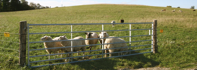 Eine Schafherde steht sicher hinter einem breiten, feuerverzinkten Weidetor und weidet | Poda Zaun