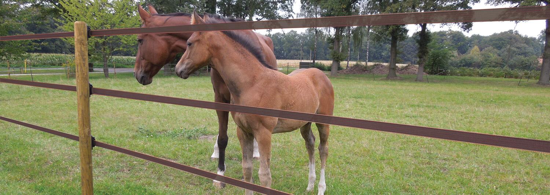Et føl og dets mor står bag et brunt polytape elhegn. Polytapen er placeret i tre højder for at sikre at hestene bliver i indhegningen | Poda Hegn