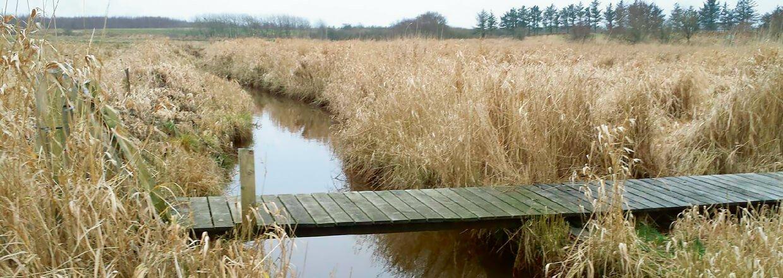 En gangbro i træ hænger over en å, i et åbent naturområde og sørger for at gående kan komme tørskoet over | Poda Hegn