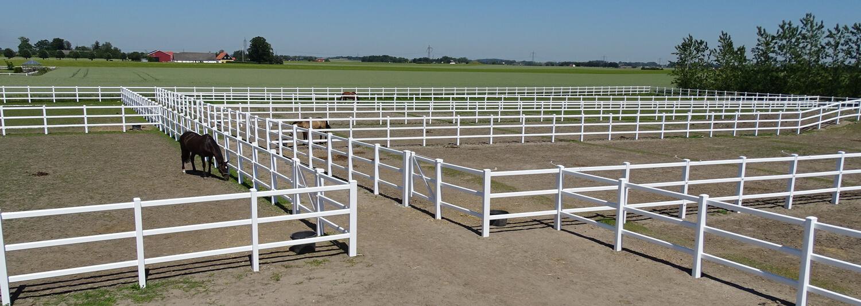 Tre heste går sikkert i hver deres hestefold på en rideskole. Hestefoldene består af et hvidt lægtehegn i plastik | Poda Hegn