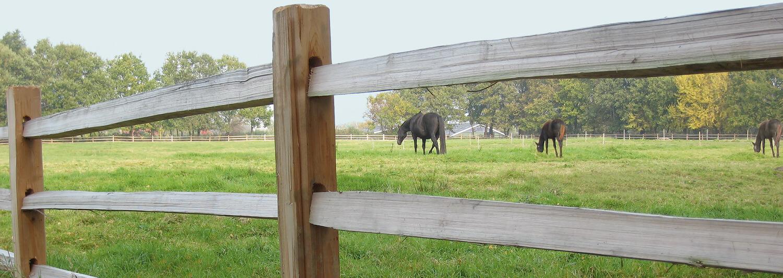 Tre store heste kan ses græsse mellem lægterne på et rustikt hestehegn af cedertræ | Poda Hegn