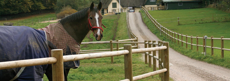 En indkørsel med hestefolde på begge sider fører op til en landejendom. Hestehegnet er et Texas træhegn fra Poda | Poda Hegn