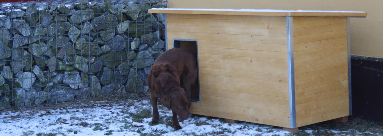 En hund er på vej ud ad døren på dens hundehus. Hundehuset er isoleret og udført i lyst træ | Poda Hegn