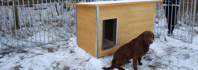 En hund sidder ude på den snedækkede jord i dens hundegård foran dens helårs hundehus i lyst træ | Poda Hegn
