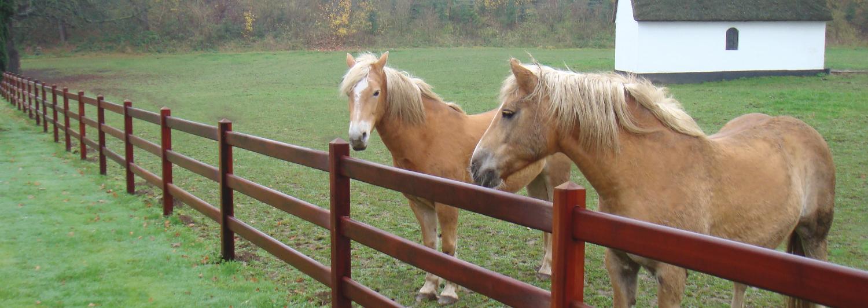 Mooi voorbeeld van een paarden omheining en paddock. Deze poda Master Omheining is voorzien van het OLB-certificaat.