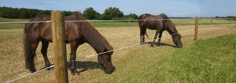 To brune hester står og gresser i kanten av hesteinnhegningen sin. Innhegningen består av et Hippolux strømgjerde | Poda Gjerder