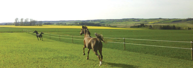 Två hästar springer och leker längs ett Hippolux-elstängsel | Poda Stängsel