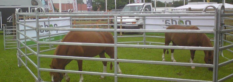 Två hästar går och betar i en fångstfålla på en djurutställning   Poda Stängsel
