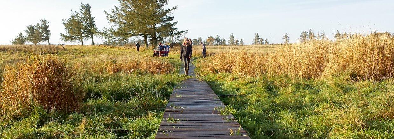 En kvinna korsar en sumpig våtmark på en upphöjd gångbro av trä | Poda Stängsel