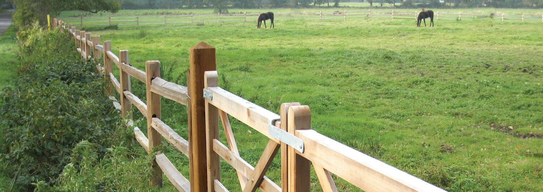 Två hästar betar på ett fält. Staketet som omger fältet är tillverkat av cederträ. En dubbelgrind av trä ger åtkomst till fältet | Poda Stängsel