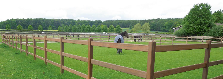 En häst går lugnt omkring i sin hästfålla. Hästfållan består av ett snyggt staket i hårdträ | Poda Stängsel