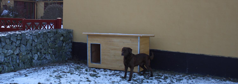 En hund står ute på den snötäckta marken vid sidan av sin helårshundkoja i ljust trä | Poda Stängsel