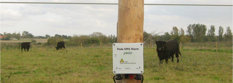 Tre svarta kor går och betar på en äng. Ett Poda SMS Alarm är monterat på fållans elstängsel   Poda Stängsel