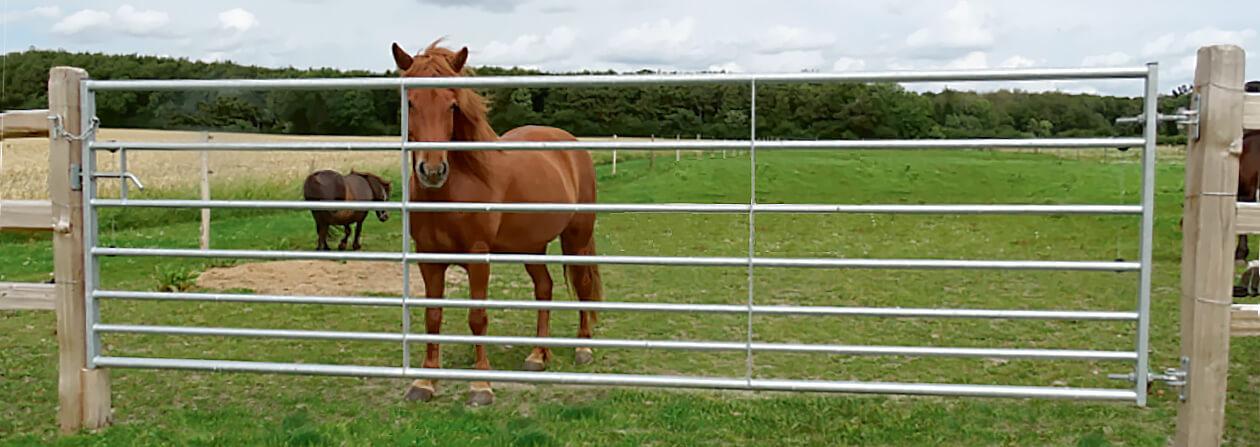 En brun häst står nyfiket och kikar ut genom den stålgrind som ger åtkomst till dess hästfålla | Poda Stängsel