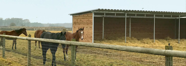 En flock hästar står framför ett vindskydd i sin hästfålla. I vindskyddet har halm lagts ut på marken, så att hästarna kan ligga torrt och varmt | Poda Stängsel