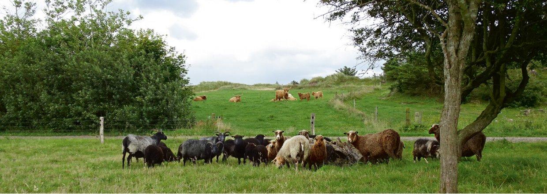 Hegn til får og geder er af højeste kvalitet