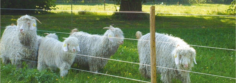 Elhegn til får og geder | Vælg det originale Poda hegn