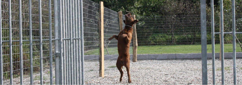 Freigehege für Hunde