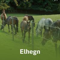 En flok heste går og spiser bag et elhegn.