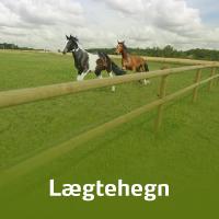 To heste løber bag et hestehegn. Hegnet er et klassisk lægtehegn i træ.