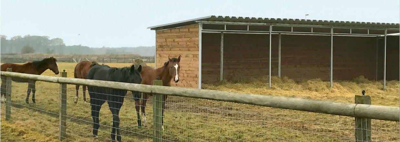 L&aelig;skur til dine heste<br>