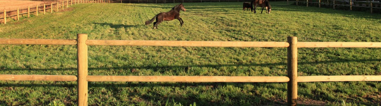 Lægtehegn til heste<br>