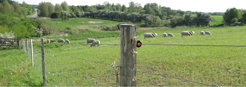 Omheiningen voor schapen en geiten<br>