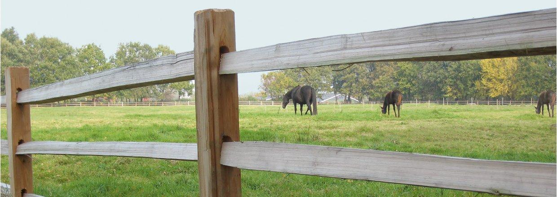 Hegn til heste
