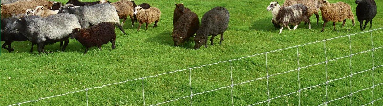 Nethegn til får og geder<br>