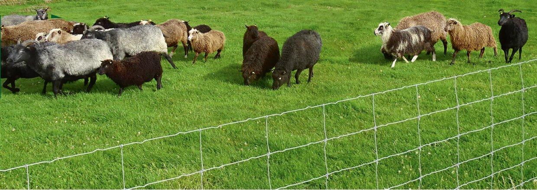 Nätstängsel för får och getter<br>