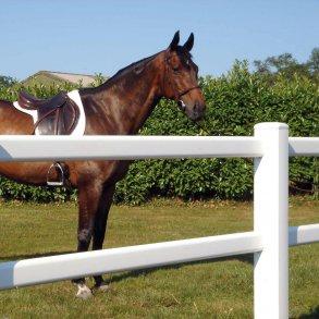 Derby hestehegn