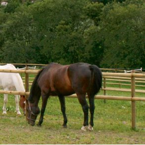 Klassisk häststängsel