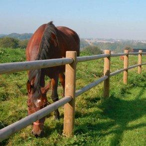 Texas hestehegn